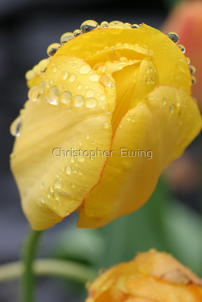 jeweled by raindrops by Christopher  Ewing