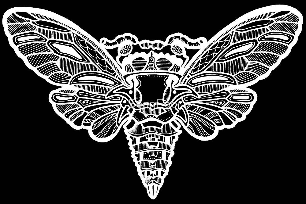 Cicada by SeanFoor