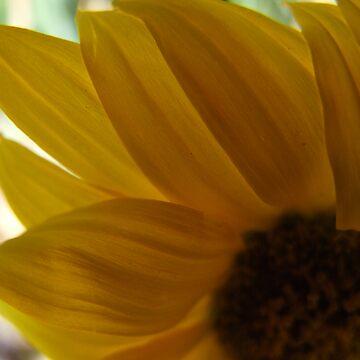 Yellow Daisy by MissA