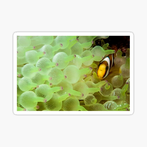 Home among the bubbles Sticker