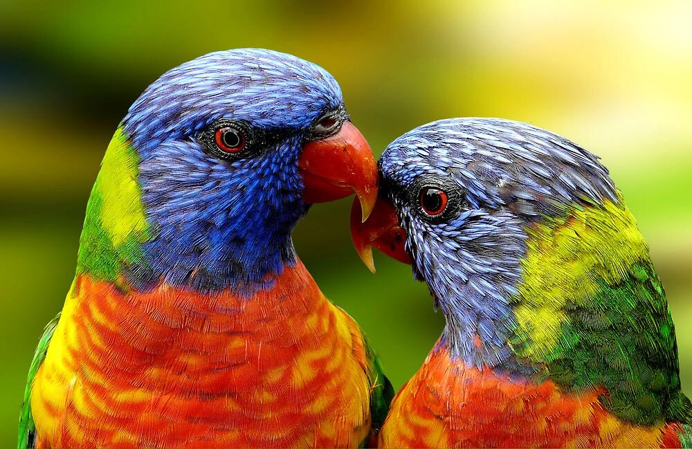 Double Rainbow by JulieM