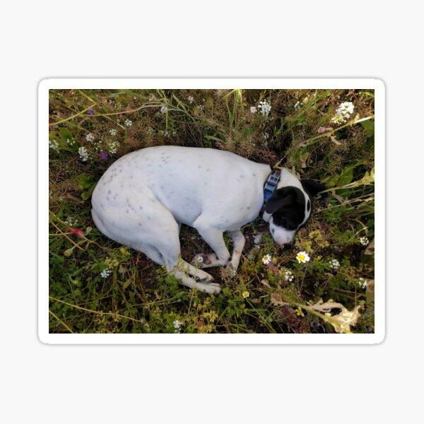 Flower Dog Sticker