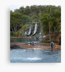 Playful dolphins Canvas Print