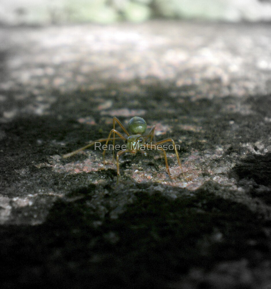 a little ant by Renee Matheson