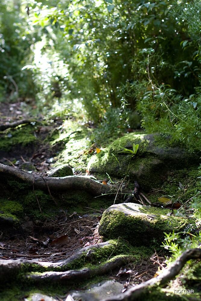 Raylight Moss by norgan