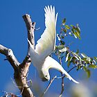 Aussie icon - Sulphur-crested Cockatoo  by Margaret Stanton