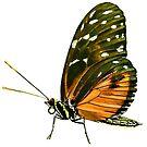Tiger Longwing Butterfly by Shirasaya