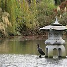 The Cormorant in  the  Japanese Garden by Paul Martin