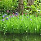 Tranquil  Irises by Paul Martin