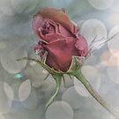 Red Rose Bud by Lynn Bolt