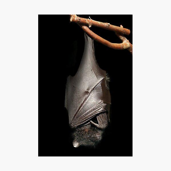 Bat on Black Photographic Print