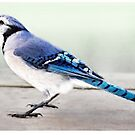 Blue Jay Card by Gracey