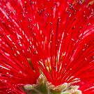 Floral Red by Dave Hare