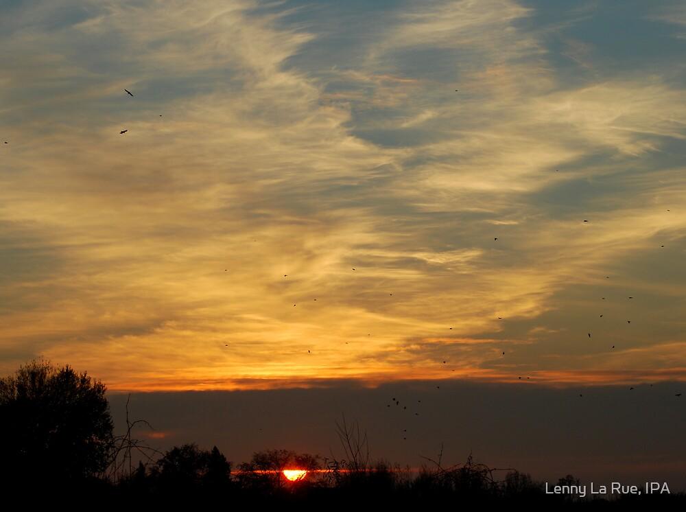 savanah sunset & returning crows by Lenny La Rue, IPA