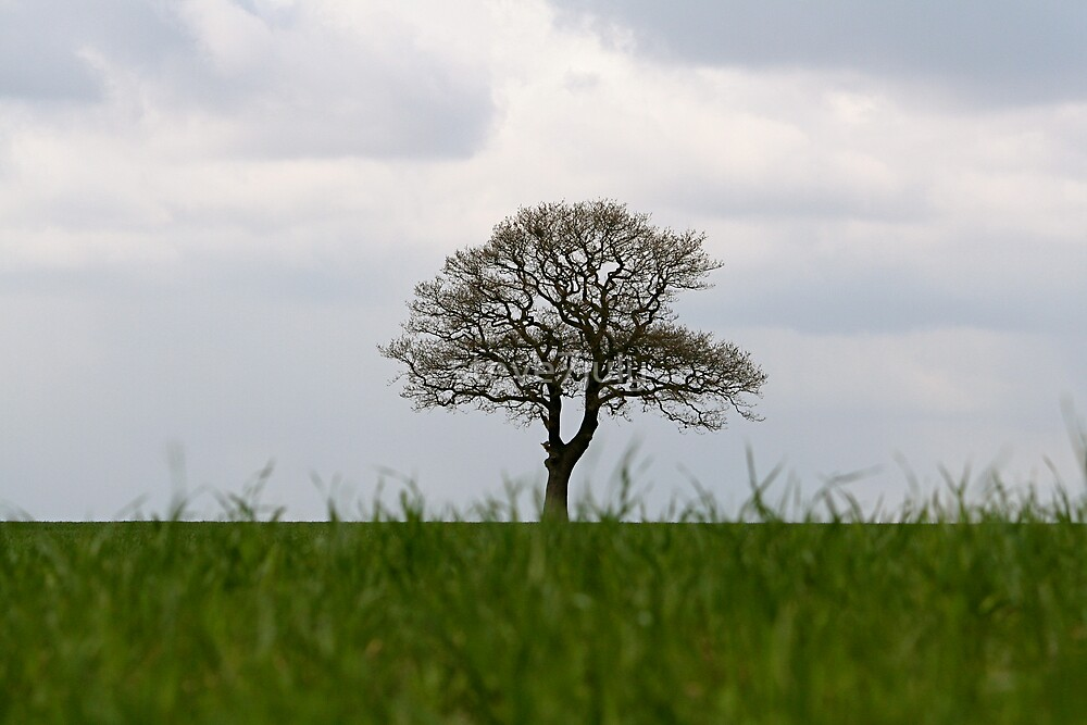 Distant Tree by steve7july