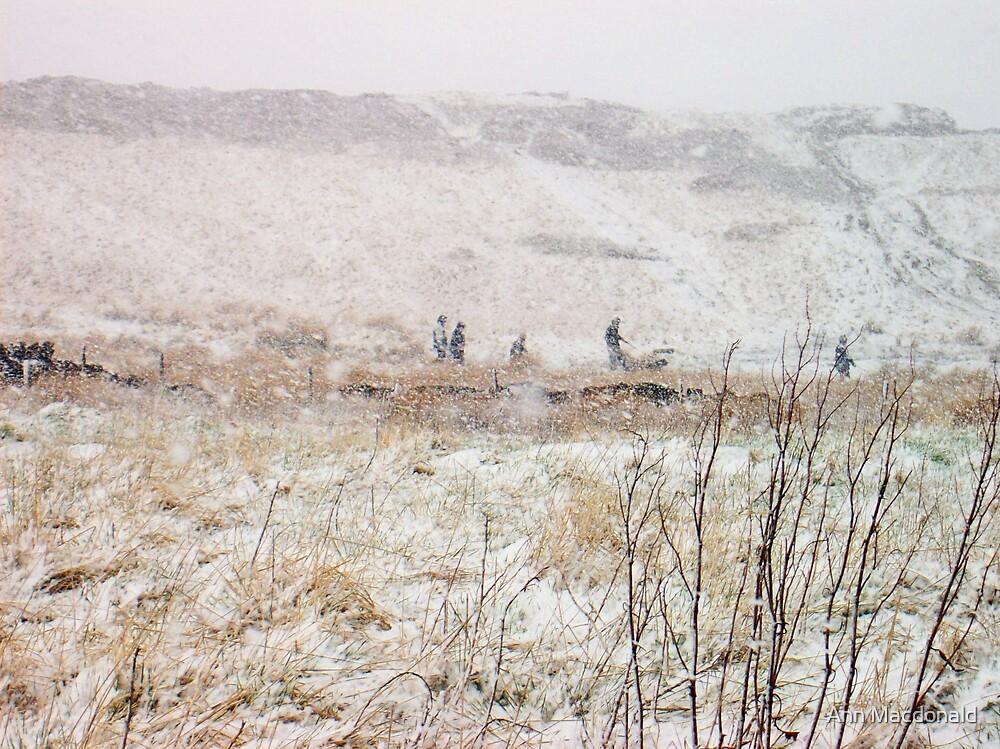 Blizzard by Ann Macdonald