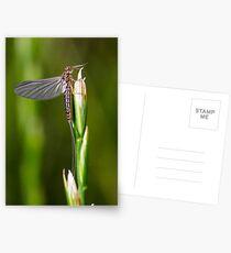 Mayfly Dun Postcards