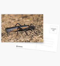 Otway Stonefly Postcards