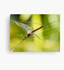Web Spinner Canvas Print