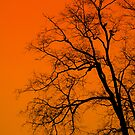 Fire Lit by Atreju Hood