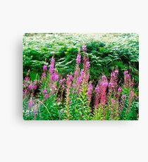 Fireweed in Donegal, Ireland Canvas Print