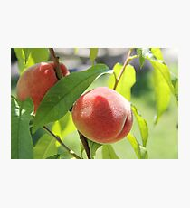 Peaches  Photographic Print