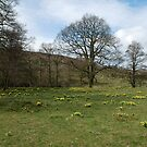 Another tree in Farndale by dougie1