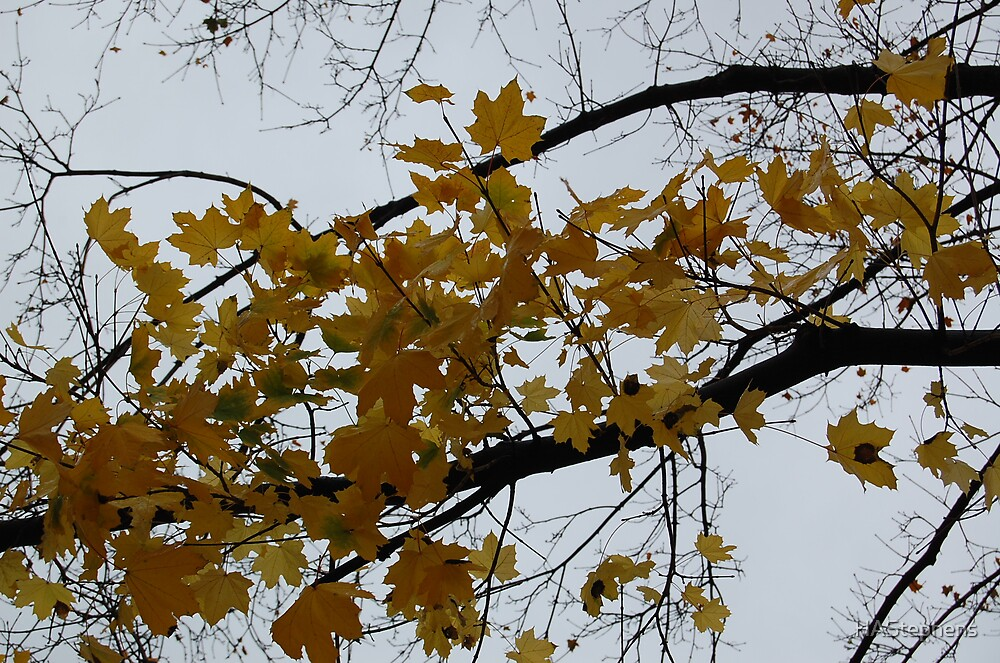 Yellow Leaves by HAStephens