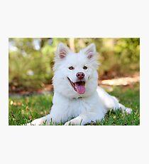 Happy Puppy Photographic Print