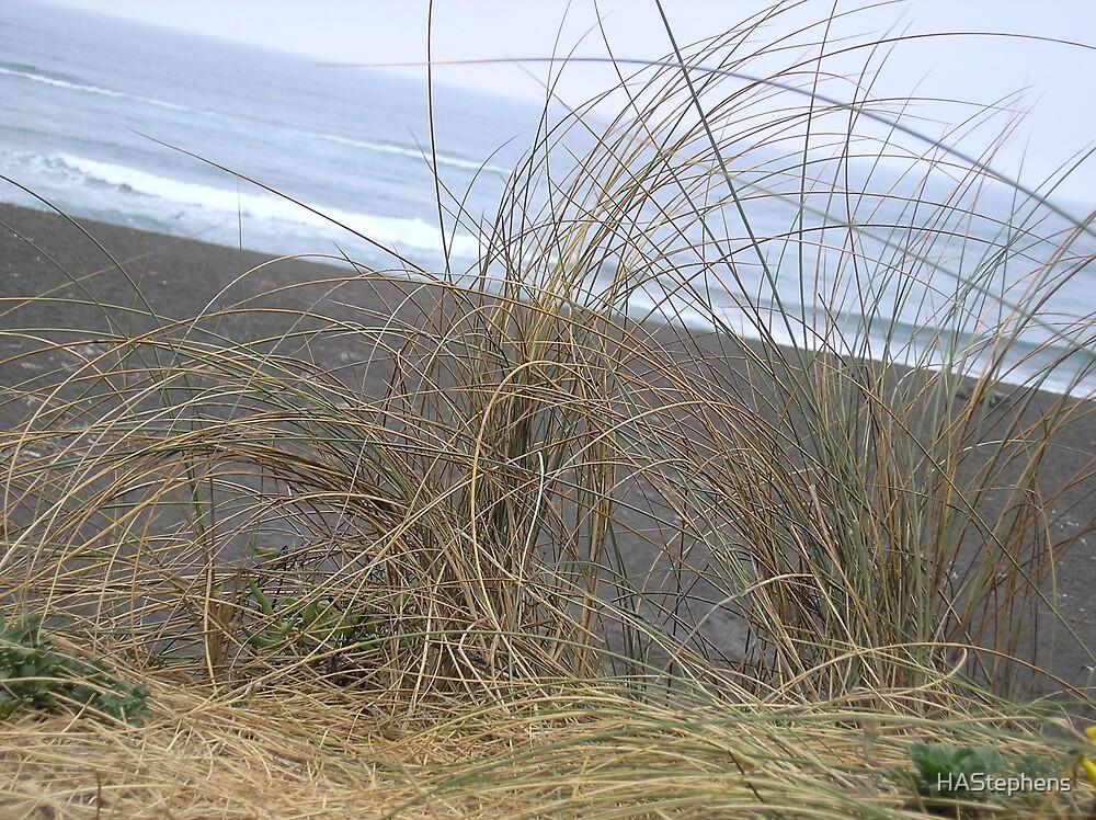 Beach grass by HAStephens