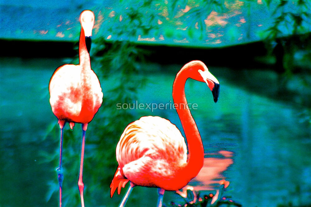flamingo #2 by soulexperience