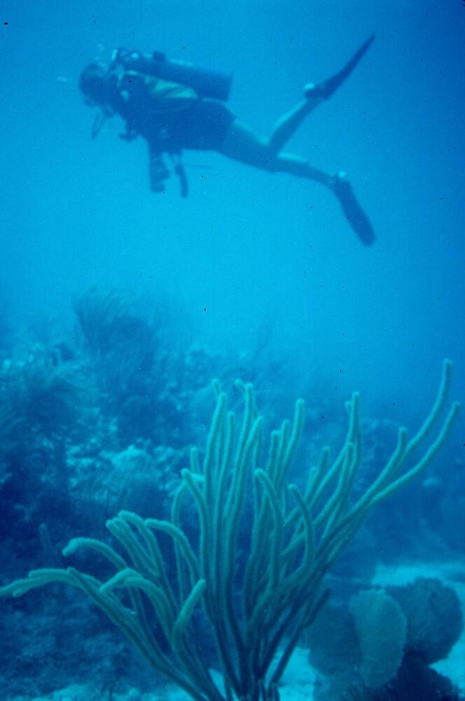 Scuba diving in the BVI by bertspix