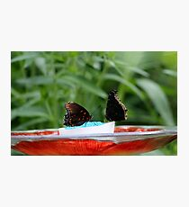 Party At The Feeder Photographic Print