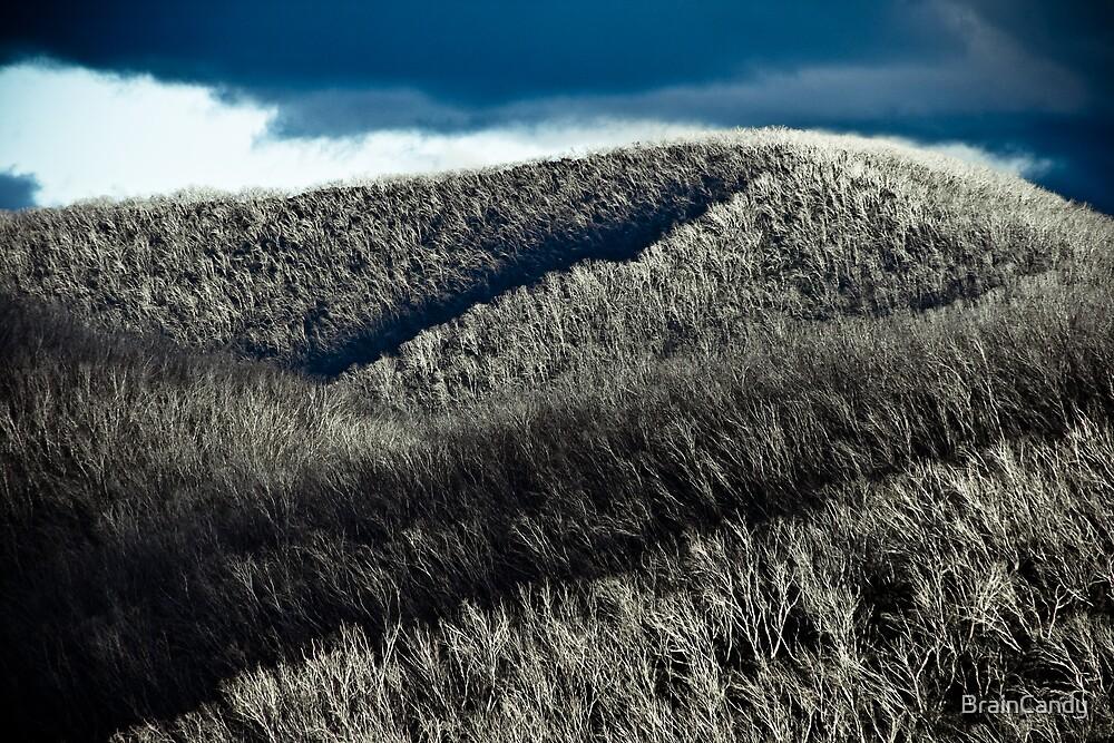 Silver forest by BrainCandy