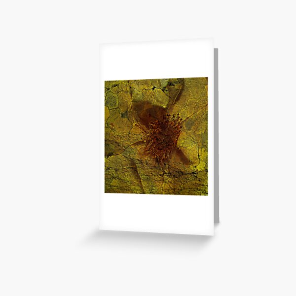 Floral Symbiosis 5 Greeting Card