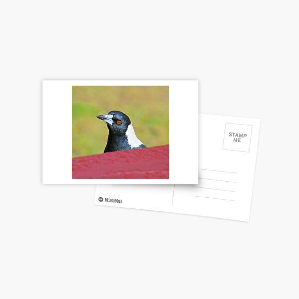 MAGPIE ~ Australian Magpie by David Irwin ~ WO Postcard