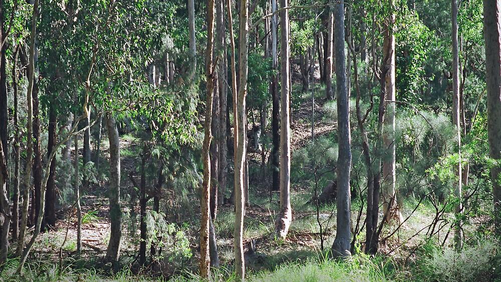 australian bush  by adam pearson