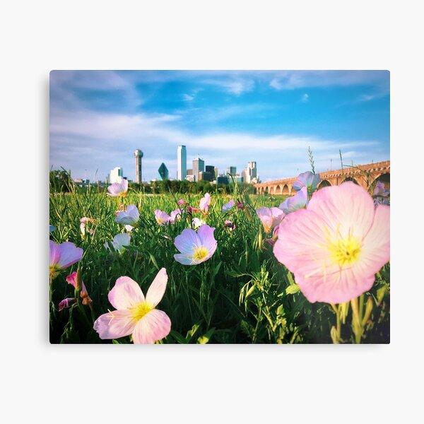 Dallas Spring Flower Metal Print