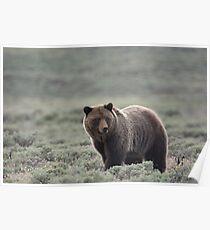 Grizzy in Sagebrush Poster