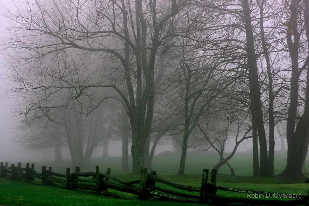 Misty Morning by Robin D. Overacre