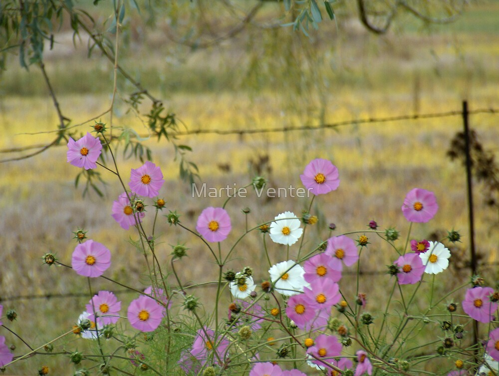 Cosmos Beneath the Willow Tree by Martie Venter