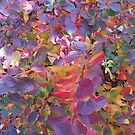 Fluorescent leaves in autumn by Paul Martin