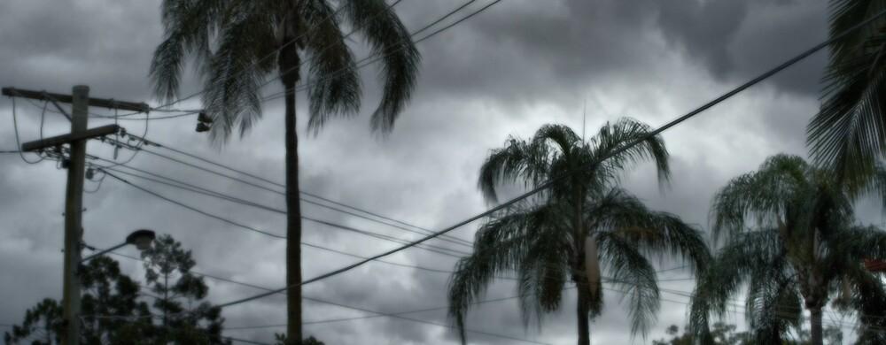 Palm Strip by Luke Haggis