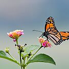Butterfly beauty 0011 by kevin chippindall