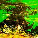 sea algae by studio24photo