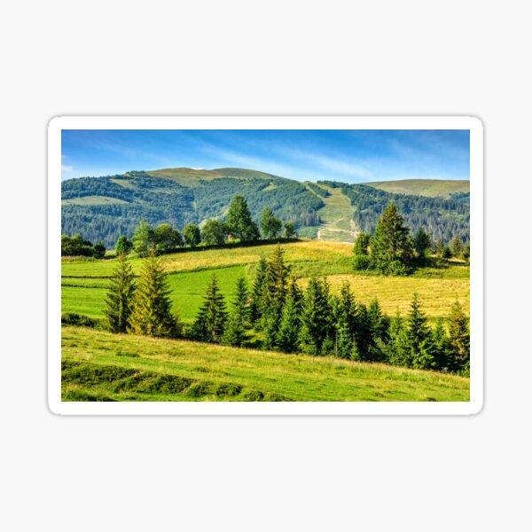 spruce forest near in valley Sticker