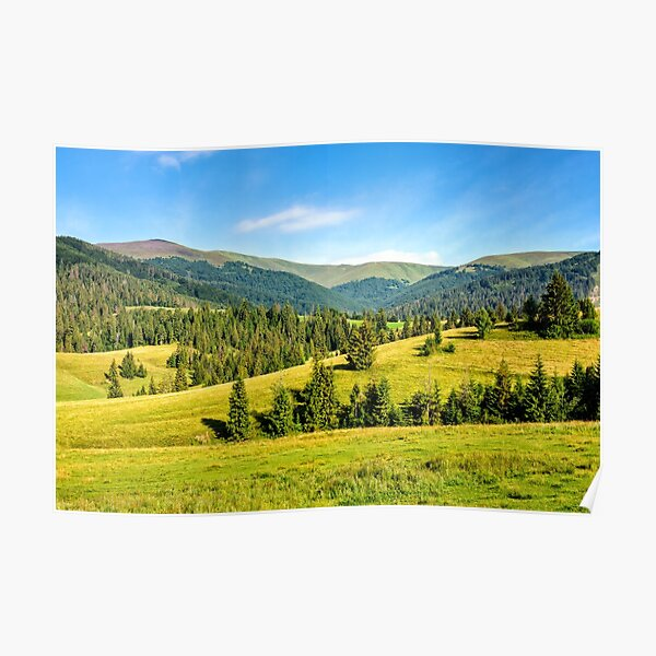 spruce forest on mountain meadow Poster
