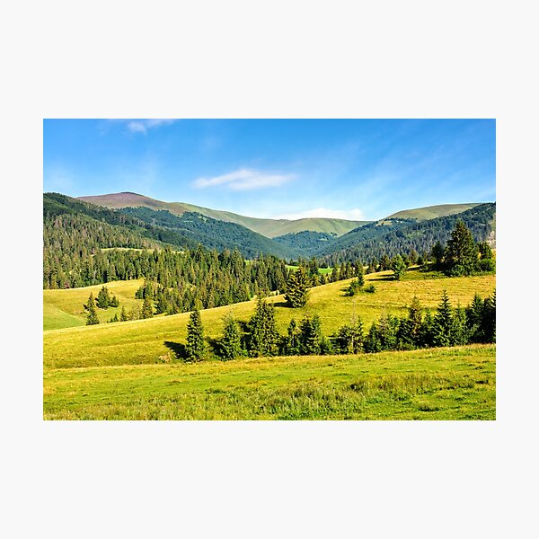 spruce forest on mountain meadow Photographic Print