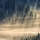 coniferous forest in foggy mountains by mike-pellinni