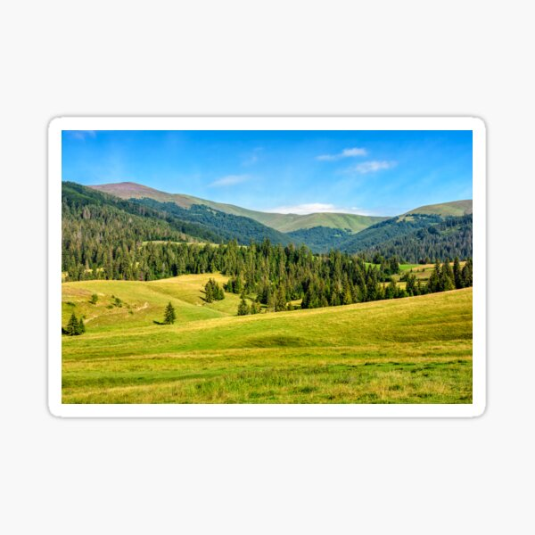 spruce forest on mountain meadow Sticker